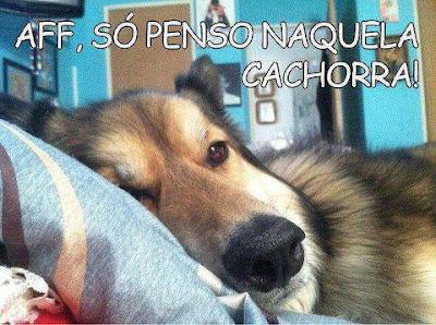 imagem de cachorro pensando na cachorra