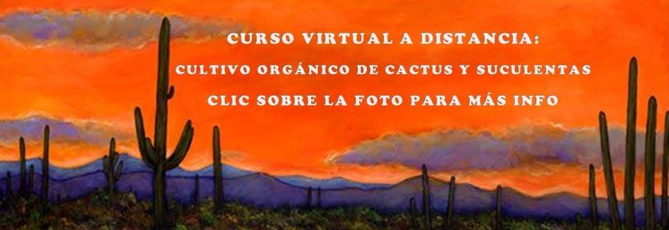 CURSO VIRTUAL A DISTANCIA