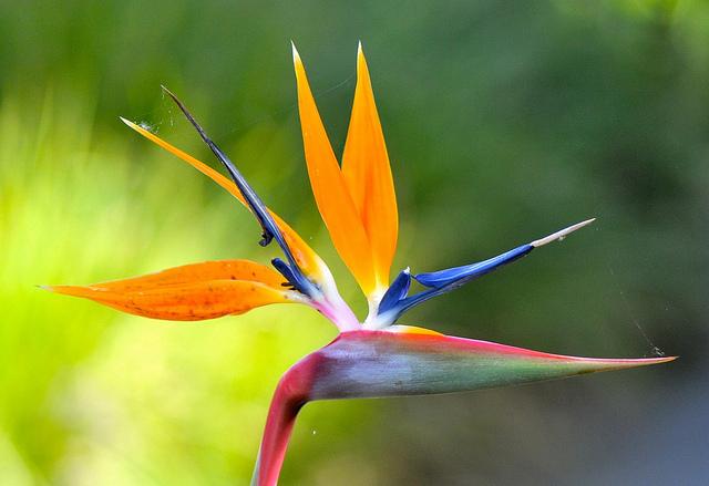 Flower Homes: Bird of ...