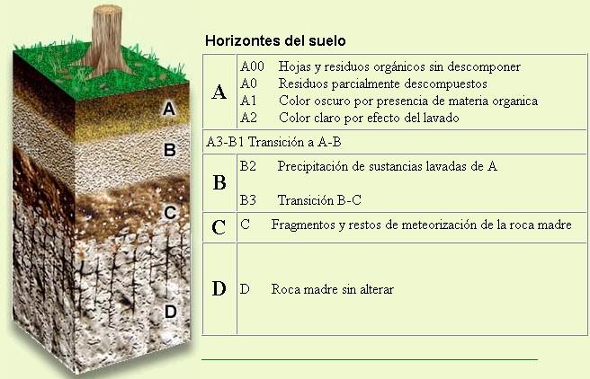 Geota33 papel de los microorganismos en el suelo - Papel para suelo ...