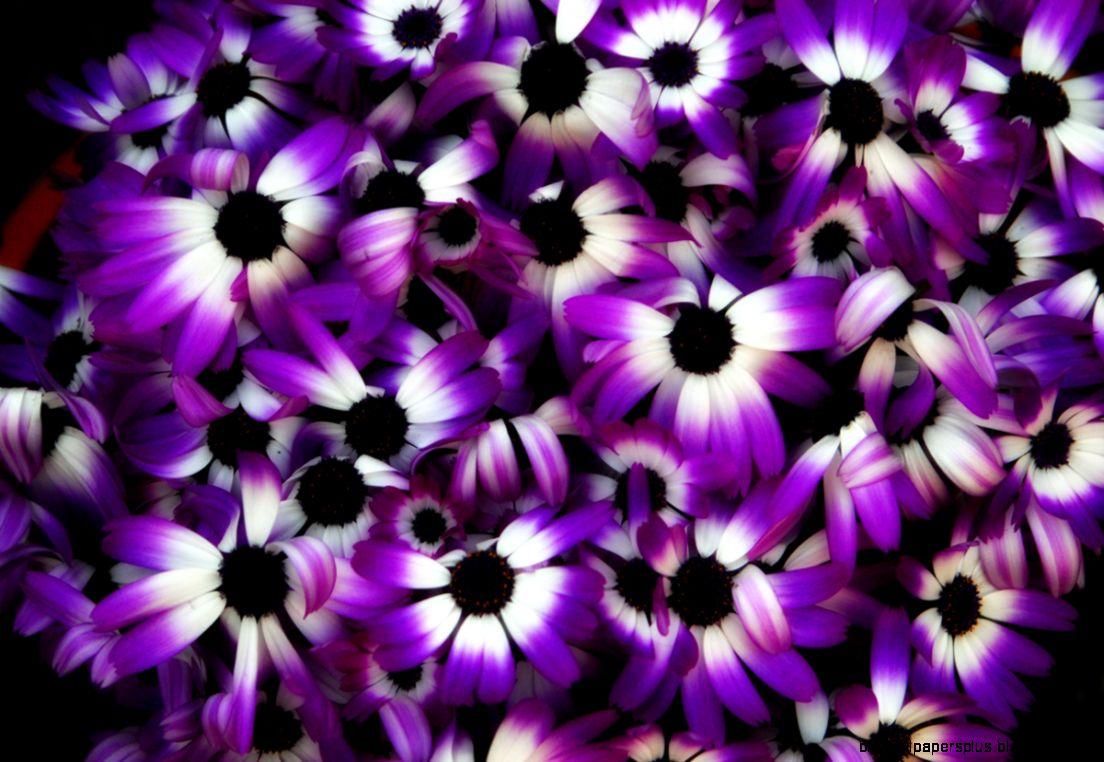 Purple Flowers  1200x803px  636049