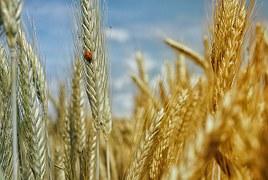 Şeydanın tohumları yeşeriyor birer birer