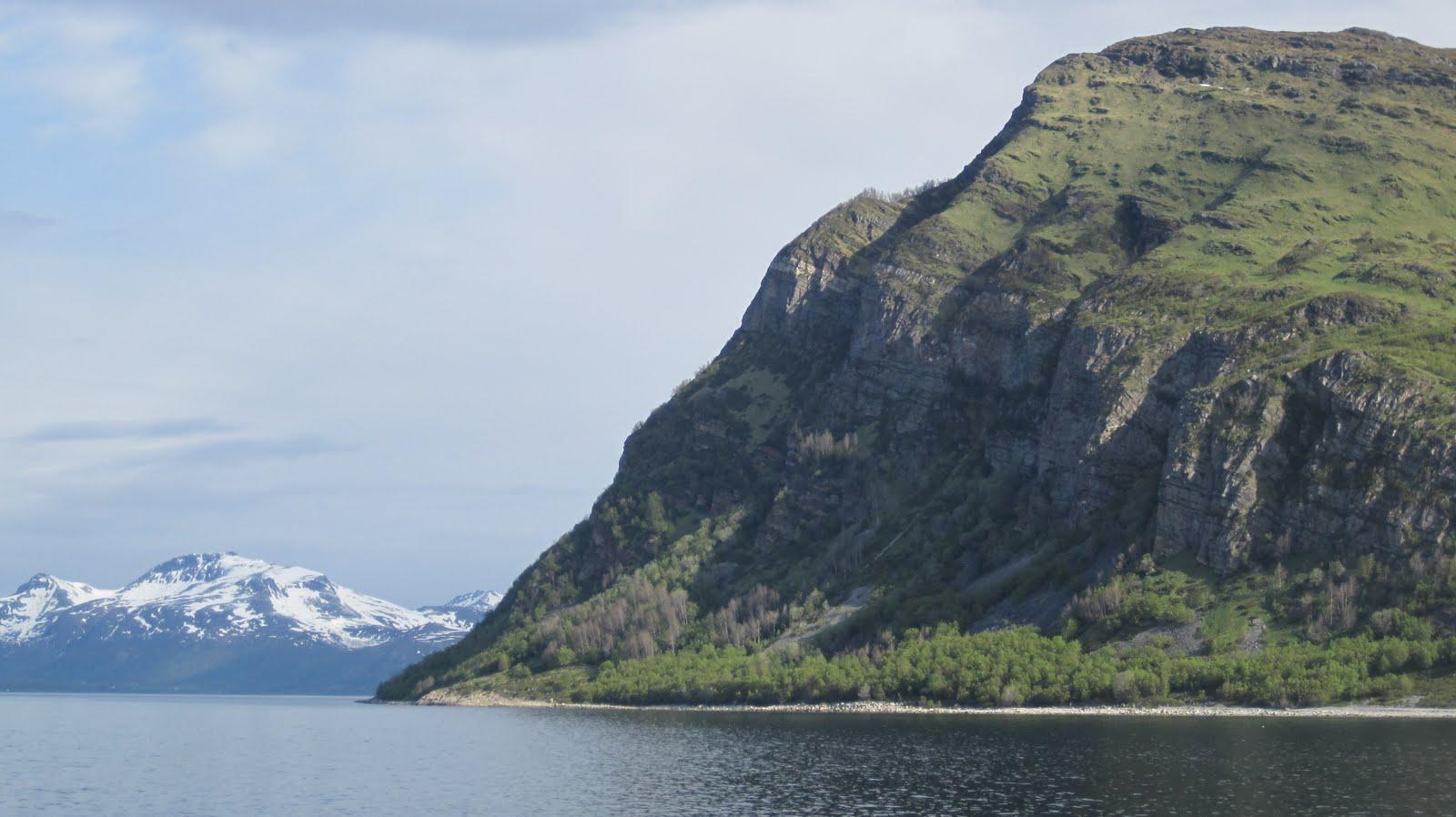 Mind fuzz long awaited pics enjoy for Cliffs tattoo long island