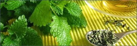 Las hierbas y remedios naturales para perder peso