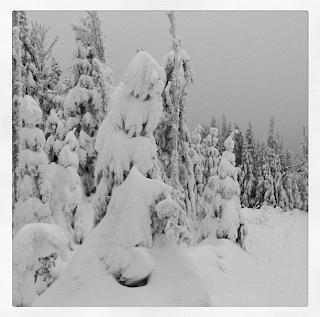 Winter Wonderland, snow