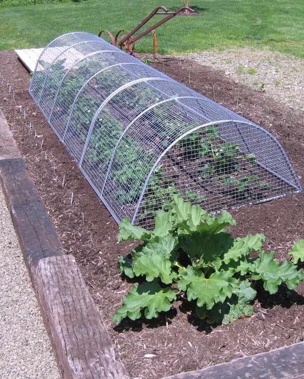 how to build a square cage for strawberries