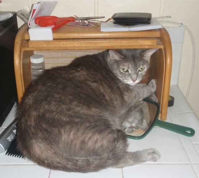 Cat In Bread Box Custom EDITORIAL 60k It's Bigger Than A Breadbox Talk Wargaming