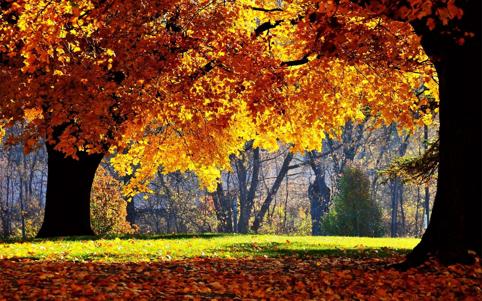 The best top autumn desktop wallpapers 1 En Güzel Sonbahar HD Duvar Kağıtları