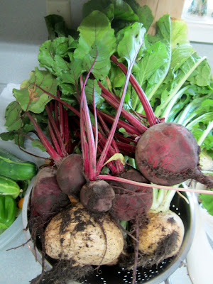 A harvest of homegrown beets and turnips on kitchen counter
