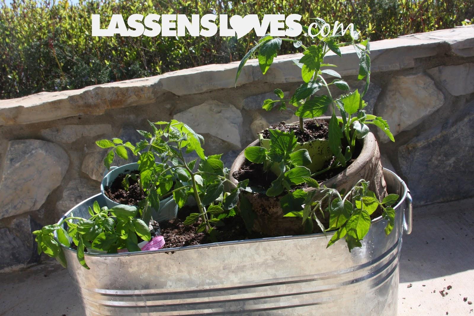 container+gardening, Patio+gardening, organic+gardening