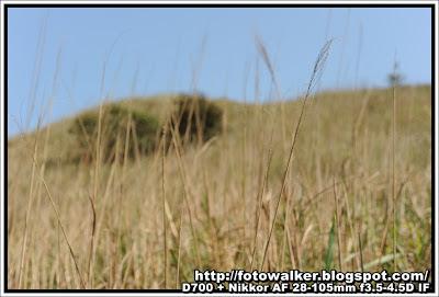 草草的事@伯公坳-大東山-爛頭營