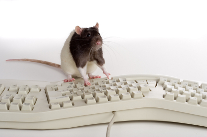 Cute mouse on keyboard