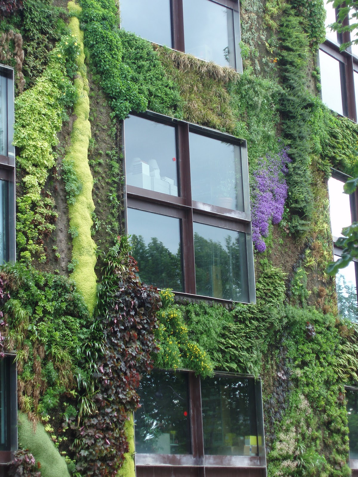 Uprooted Gardener How to Build Your Own Living Wall or Vertical