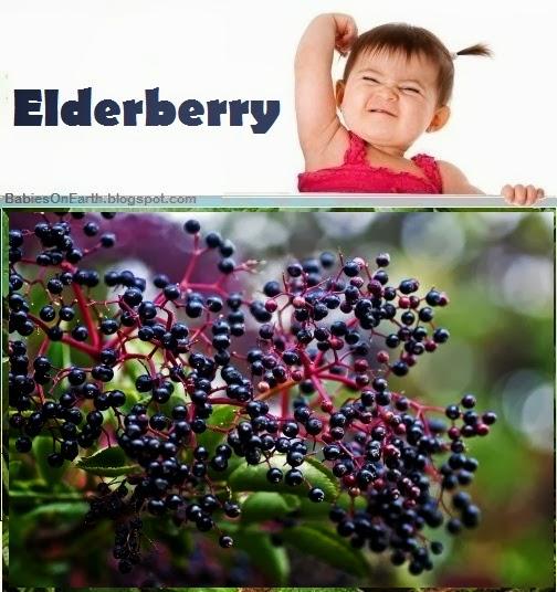 Baby Elderberry