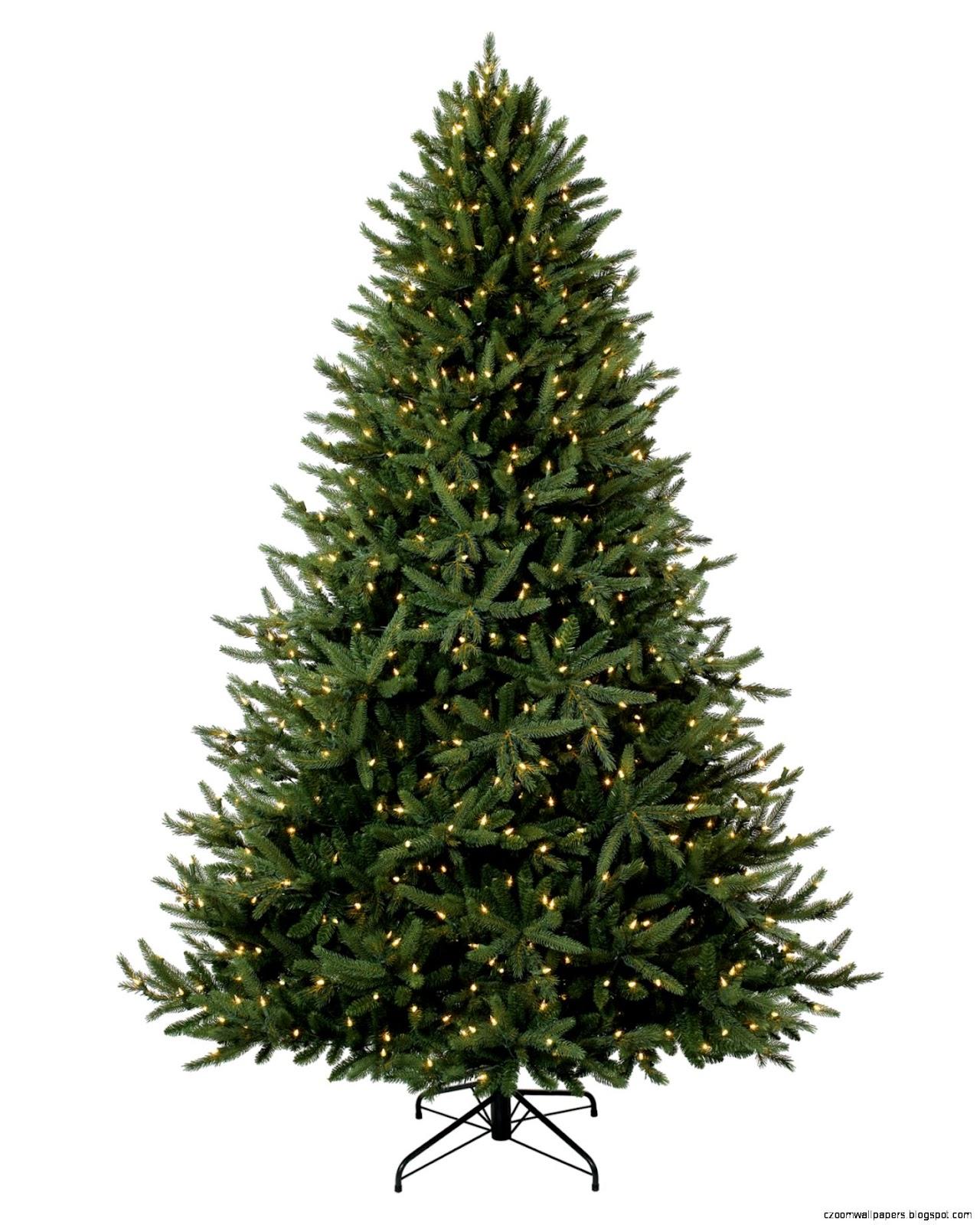 Treetopia Christmas Trees
