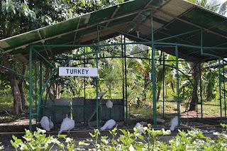 turkey of Garin farm