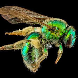 Bee Macro Photos