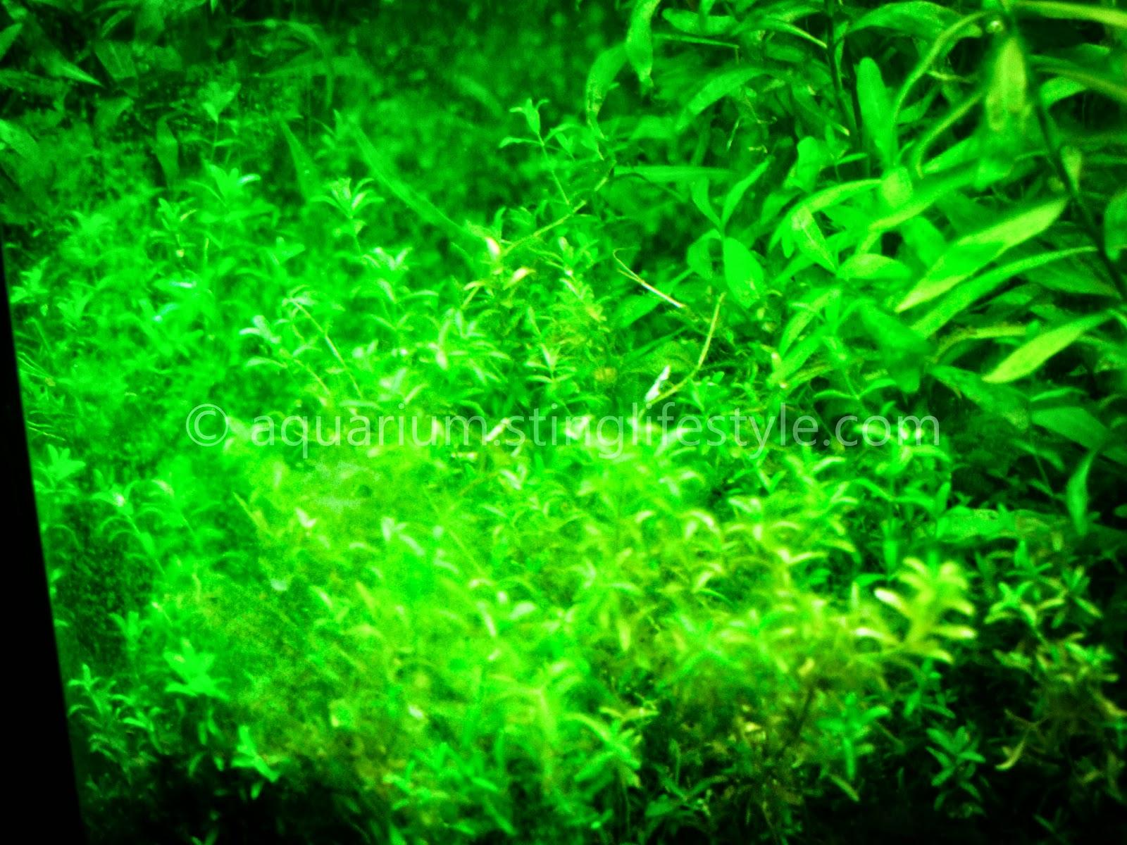 Aquarium Oh Green Black Hairstyle And Haircuts
