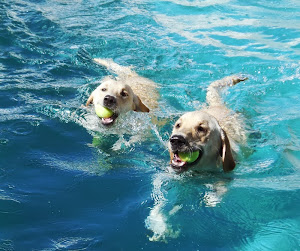 Bronko & Lucy Staying Cool!