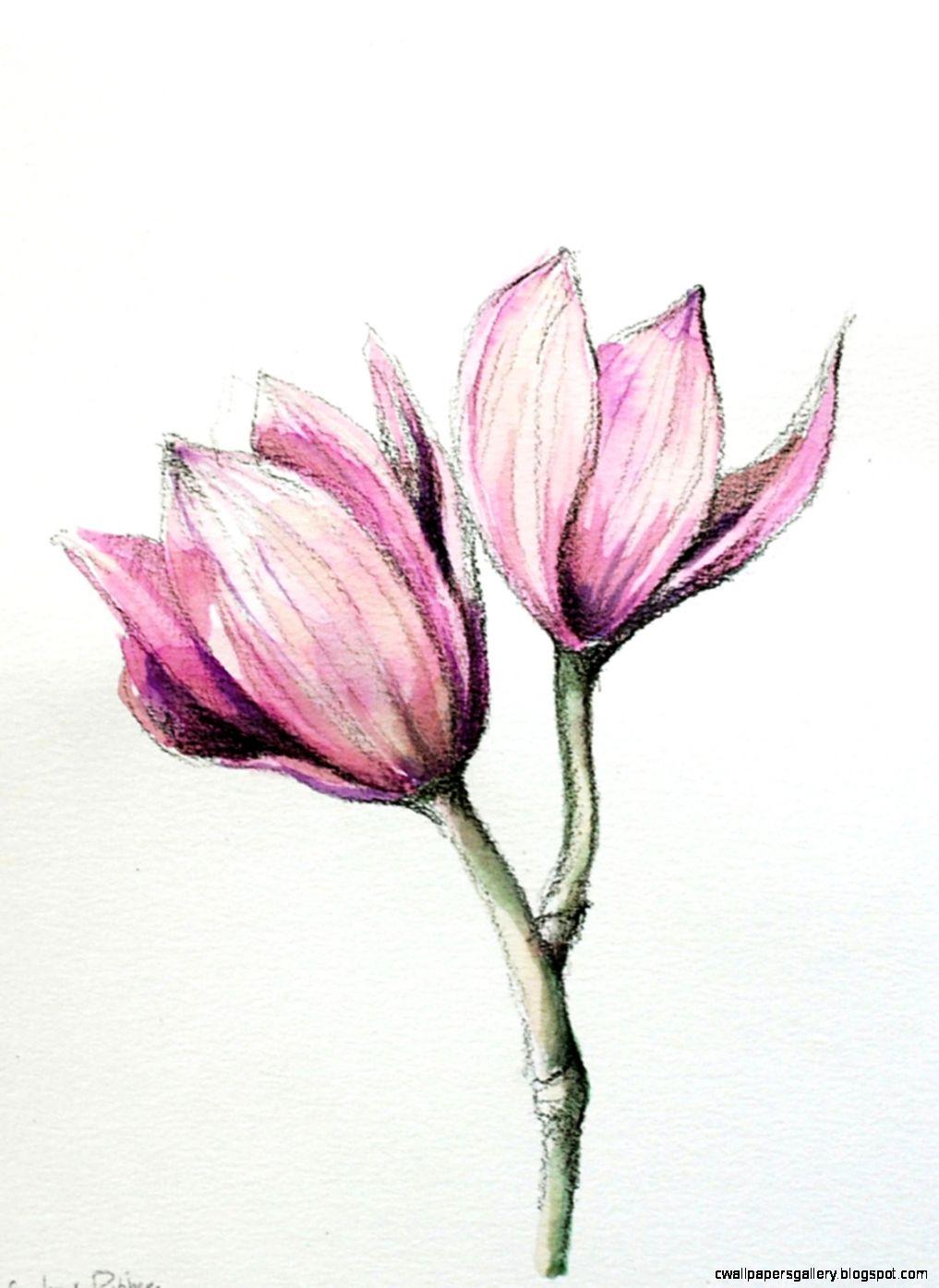 Flower Drawings Color   Flowers Ideas