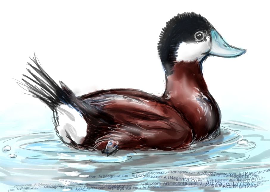 Ruddy Duck sketch painting. Bird art drawing by illustrator Artmagenta