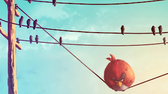 #8 Angry Bird Wallpaper
