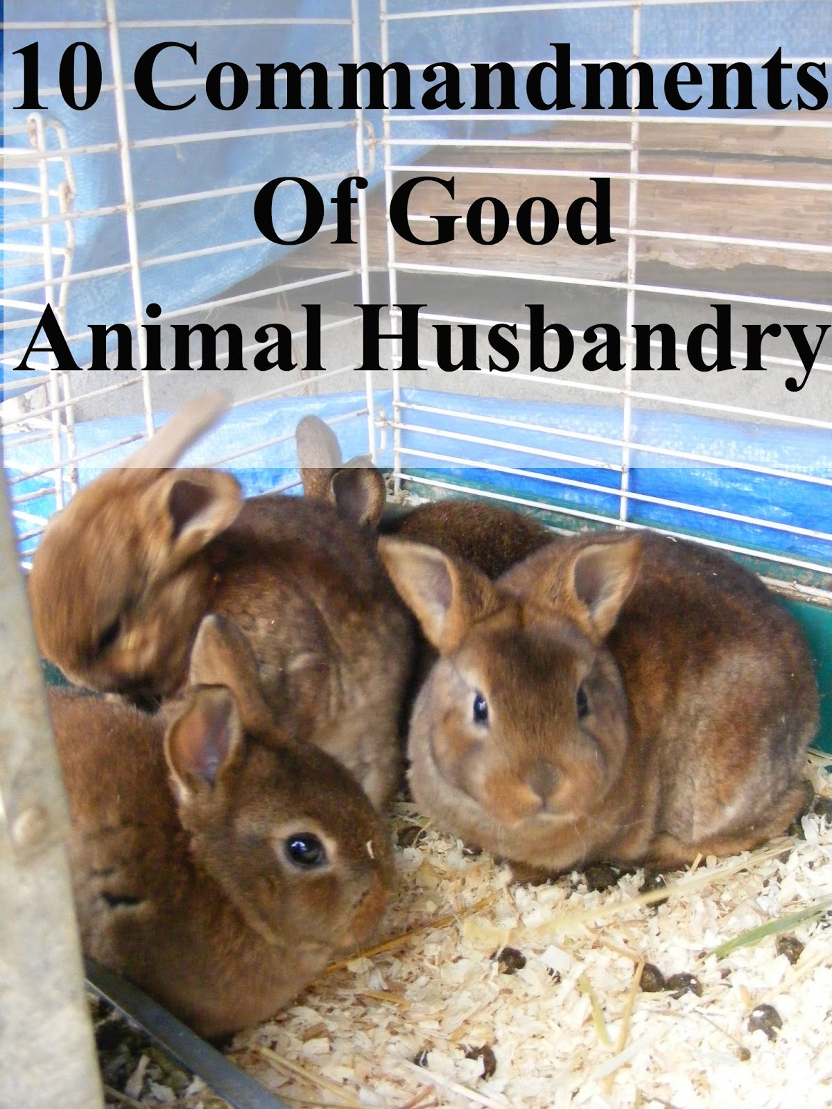 10 Commandments of Good Animal Husbandry