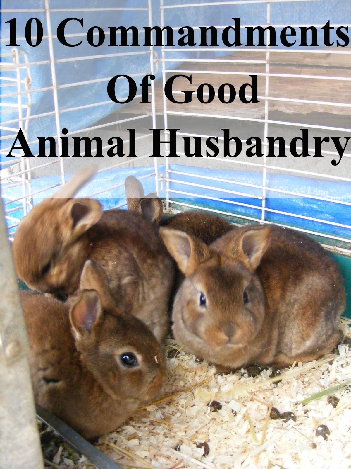 10 Commandments of Good Animal Husbandry