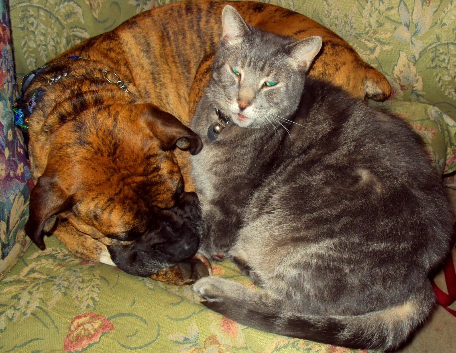 adverse effects of prednisone on cats