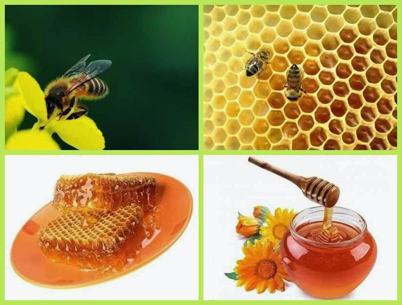 Honey Bee Farming Income | Business Ideas