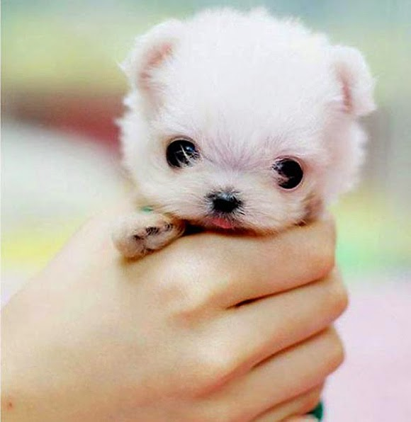 Puppies Cute Pictures