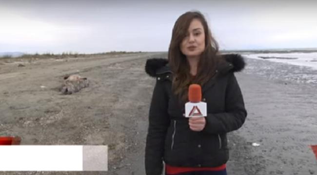 Αρχαίο είδος φάλαινας έξι μέτρων ξεβράστηκε σε ακτή στην Αλεξανδρούπολη (βίντεο)