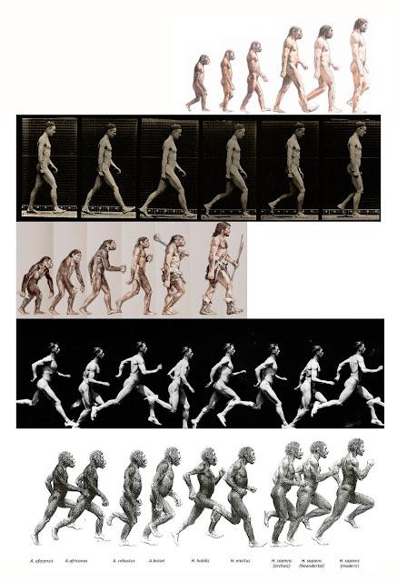 imagen cientifica. cronofotos, ilustraciones