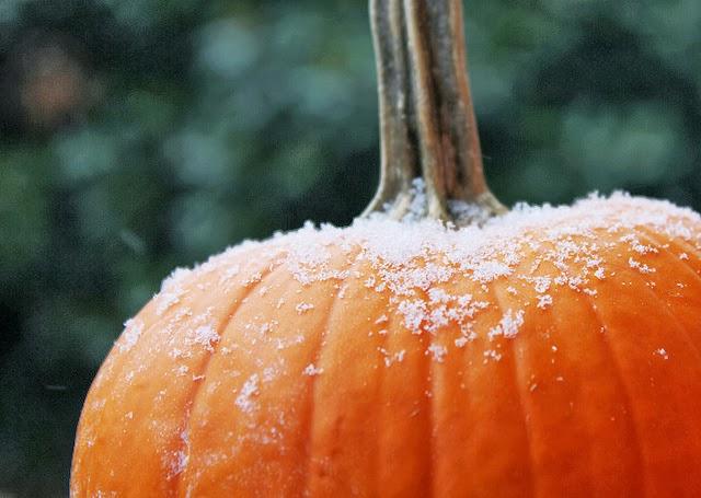 http://3.bp.blogspot.com/-B4JOLgpxCfM/UmaO5zaVLeI/AAAAAAAACEA/nQVdDBsawOg/s1600/frost+pumpkin.jpg