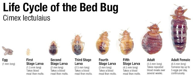 Can Bed Bugs Get Inside Of Cushions
