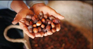 Argan Fruits Photo by Good Morning