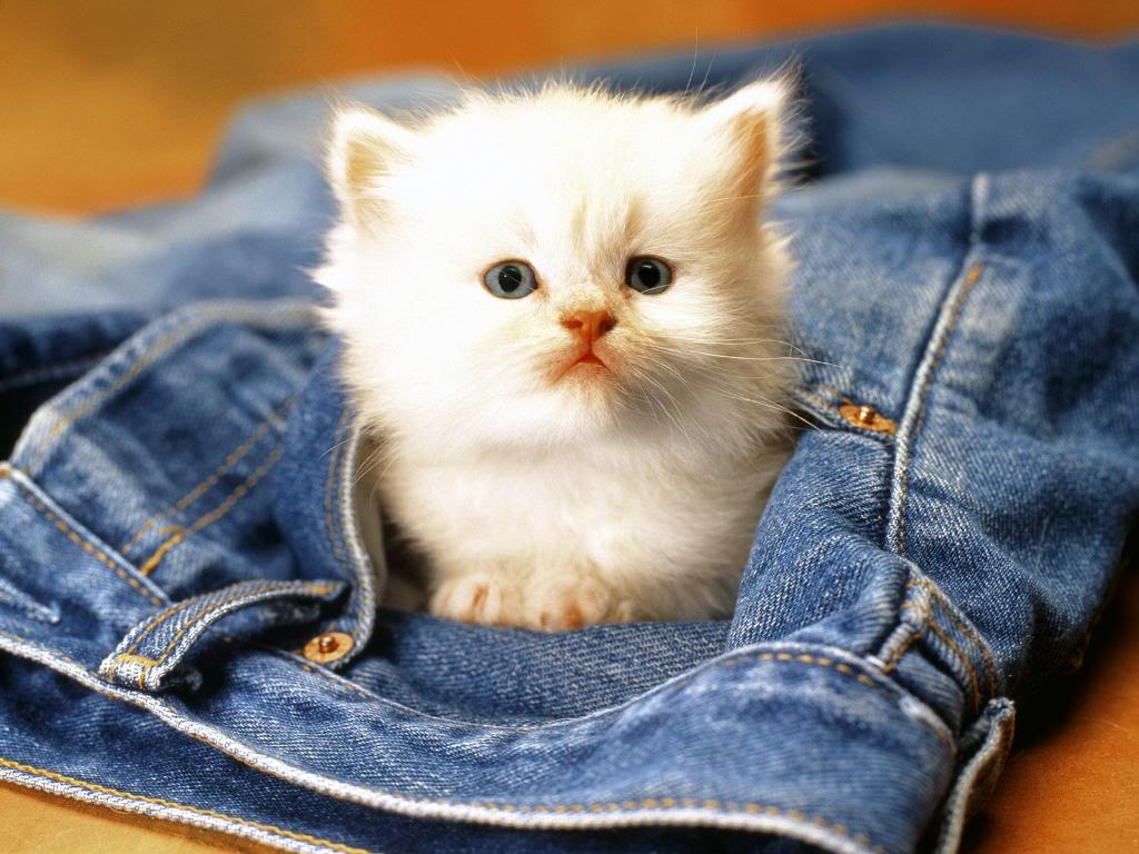 http://3.bp.blogspot.com/-B57RYOuaeVU/T3wTAaw7sCI/AAAAAAAABp0/4f78BZAek-U/s1600/cute_kitty_wallpaper_006.jpg