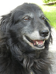 Our Beloved Belle (1999-2012)