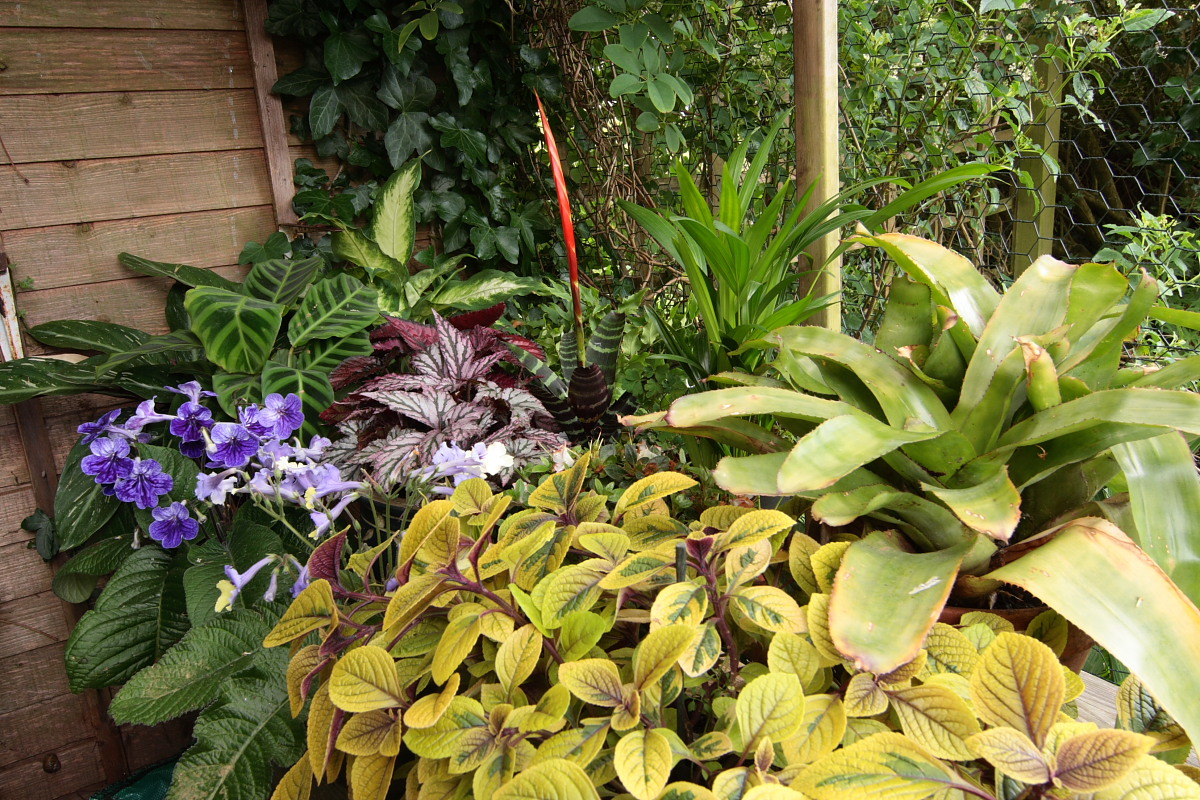 John maria 39 s garden pages a little shade house - House plants that like shade ...