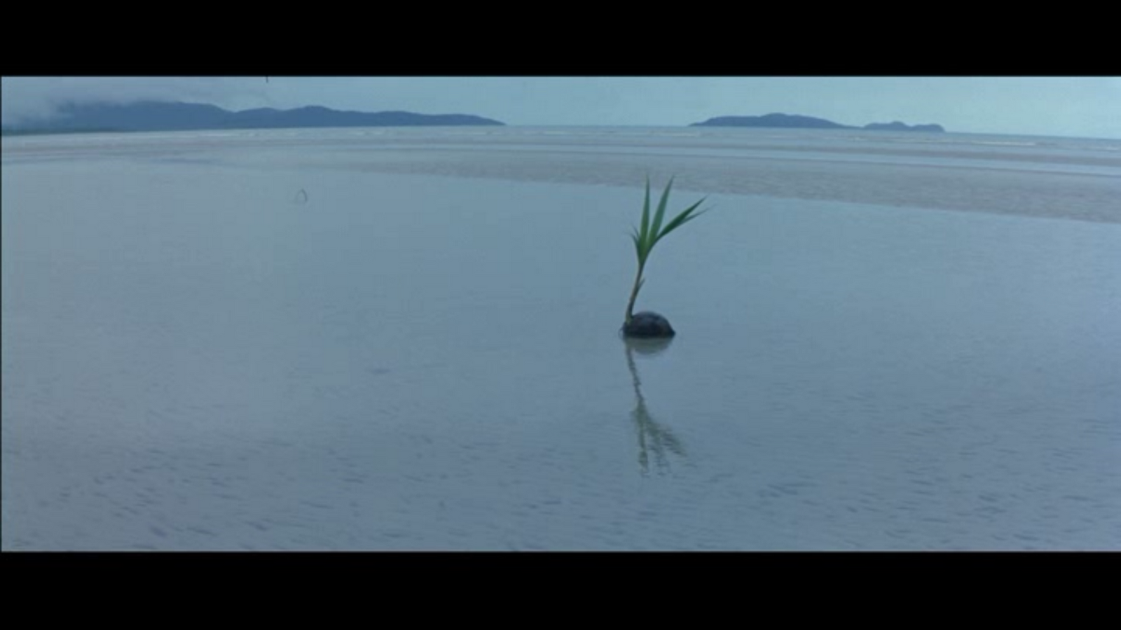 the thin red line The opening shot of the thin red line (1998) features a crocodile dipping into  water and submerging itself the image connotes nature as.