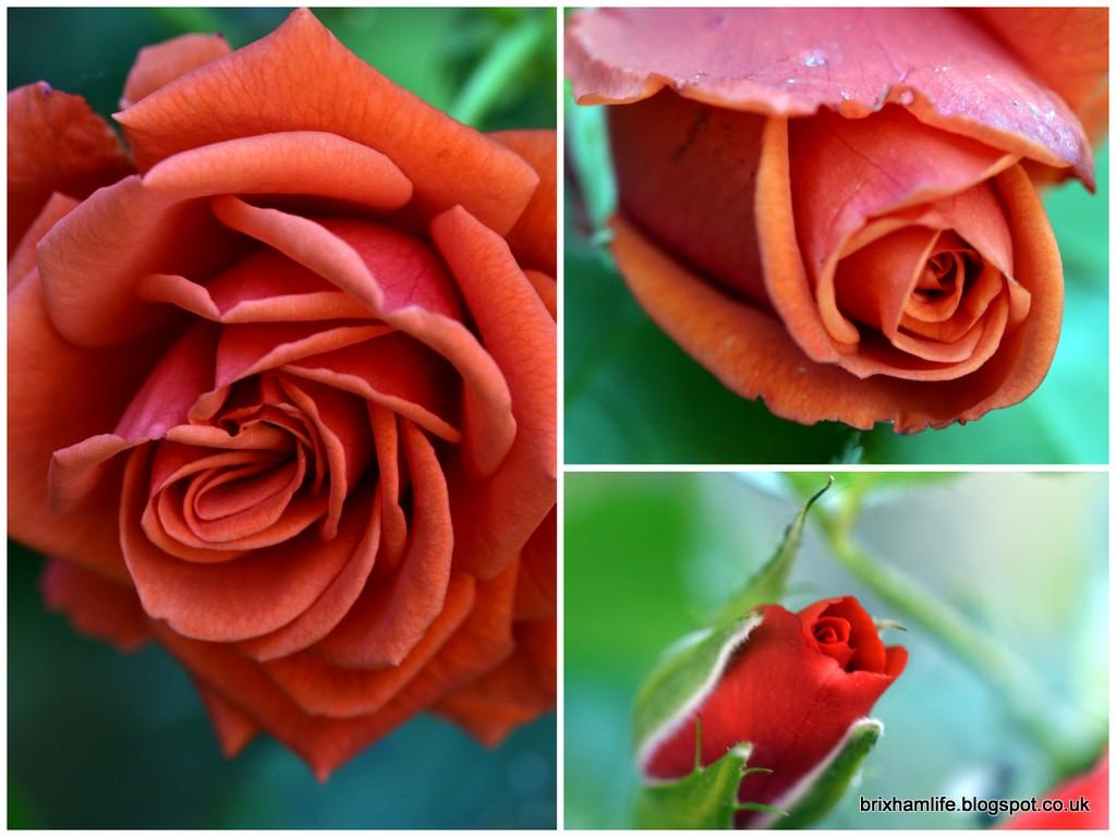 Beautiful Brixham August Flowers
