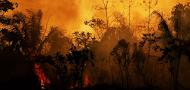 Hay que derrotar a Bolsonaro para salvar el medio ambiente