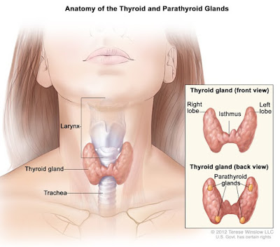 Do you know what is the difference between hypothyroidism and hyperthyroidism?
