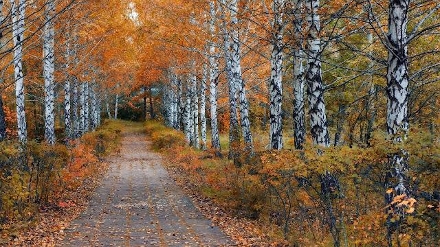 Camino en el Bosque fondos de la naturaleza