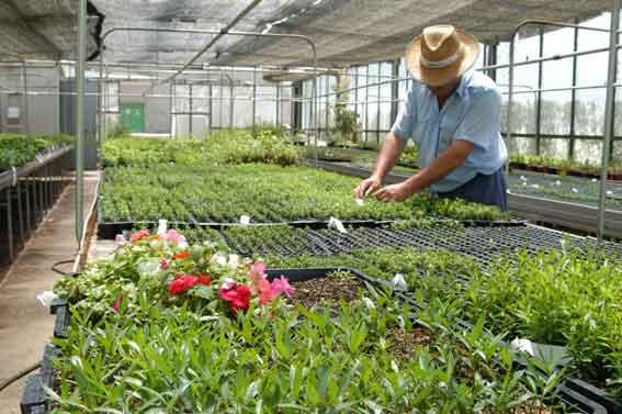 Noticias san pedro 12 02 11 for Plantas para viveros