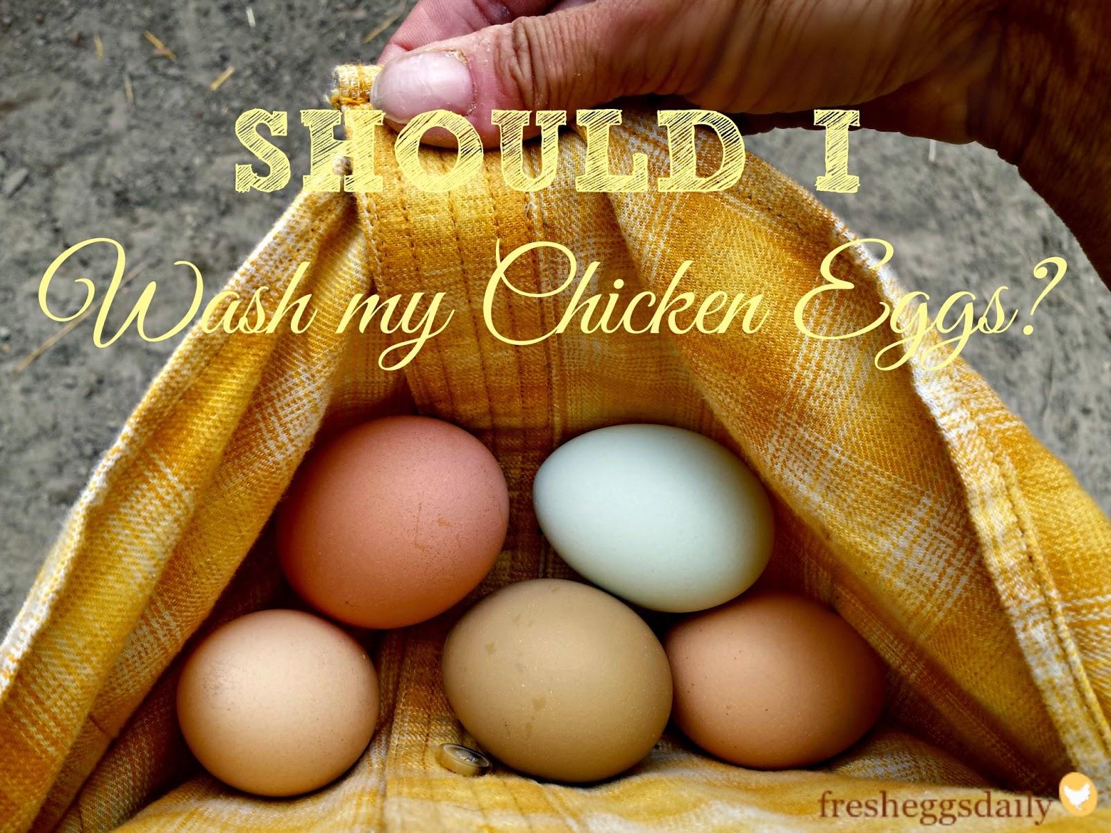Should I Wash my Chicken Eggs?