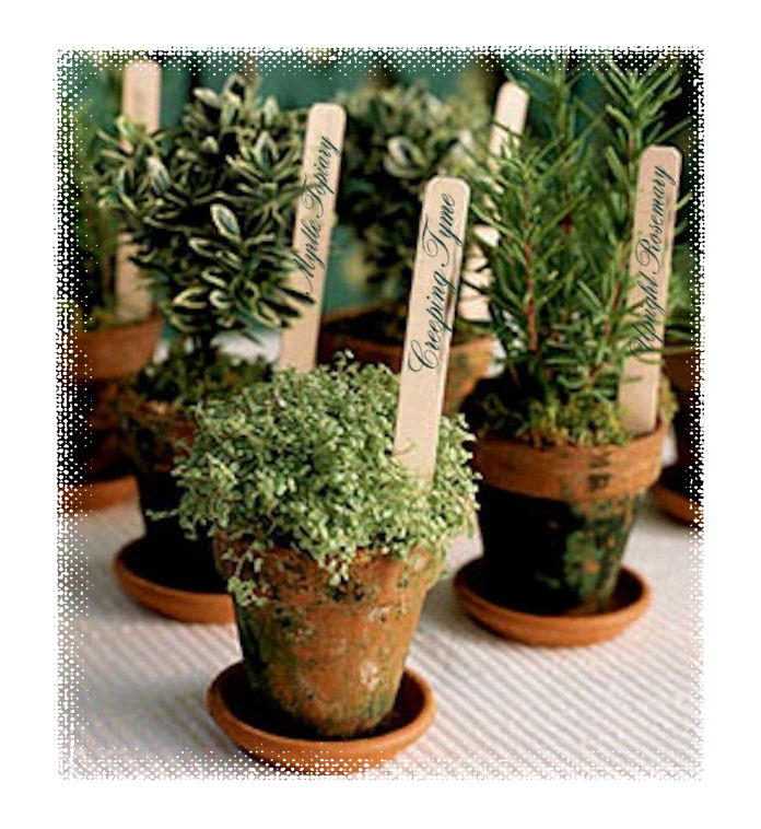 Nice Small Herb Pots Part - 1: Planting A Culinary Herb Pot
