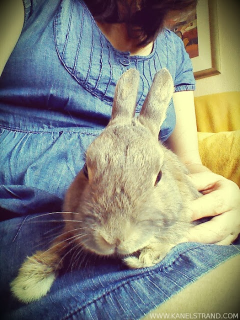 Spending quality time with a rabbit