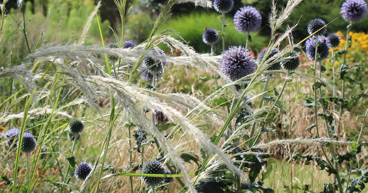 Bluebell Cottage Gardens And Nursery Perennial Grasses
