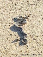 Grilled Rattlesnake